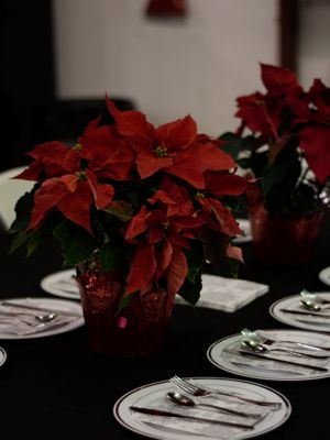 Holiday Flowers - Holiday Gallery